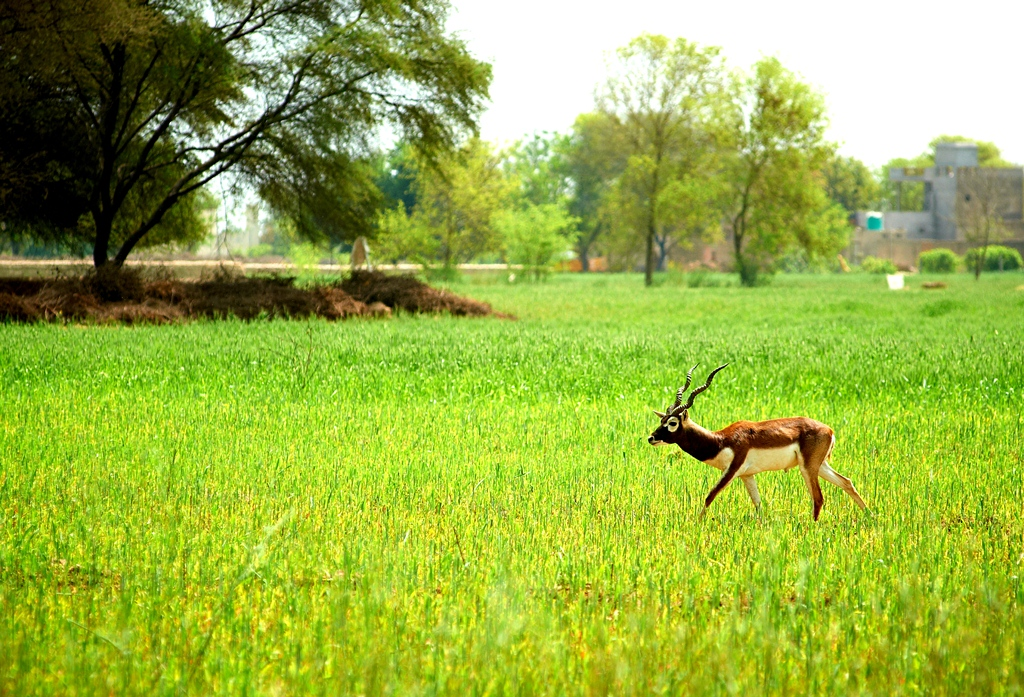 Wildlife trips in Punjab